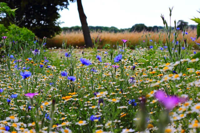 The Importance of Growing Meadows in Riverview