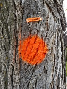 orange dot on tree