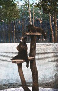 bears in bear pit