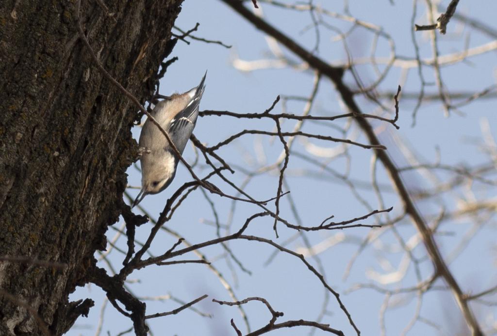 riverview bird