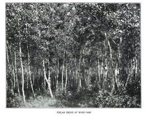 poplar grove at river park