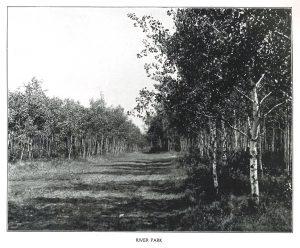 river park forest