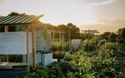 Sustainable South Osborne Community Cooperative – Virtual Harvest Dinner