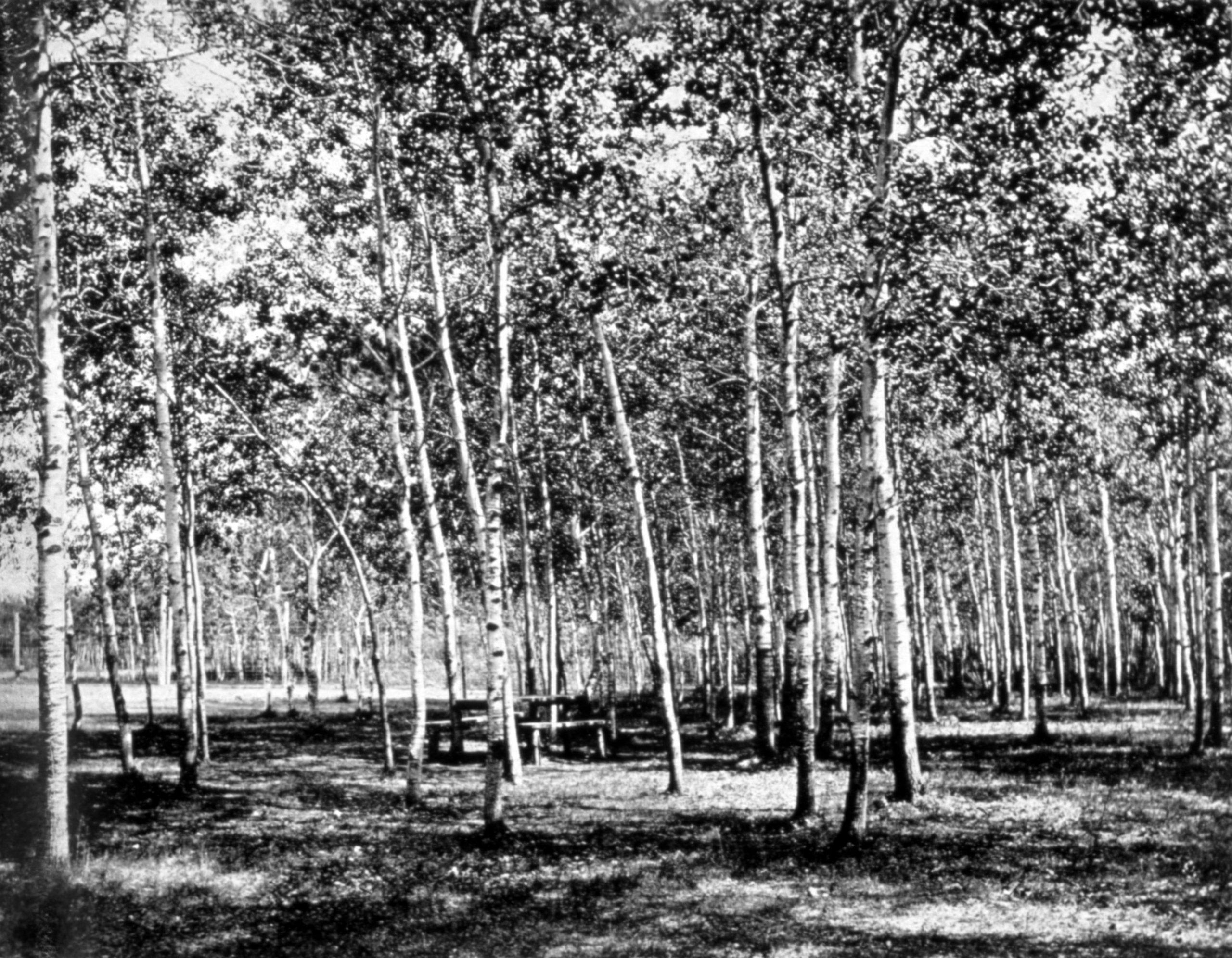Corner Of Poplar Grove At River Park